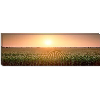 iCanvasArt View of The Corn Field During Sunrise, Sacramento County, California Canvas Wall Art