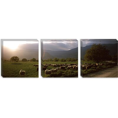 iCanvasArt Flock of Sheep Grazing in a Field, Feneos, Corinthia, Peloponnese, Greece Canvas ...