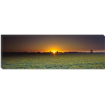 iCanvasArt Field of Safflower at Dusk, Sacramento, California Canvas Wall Art