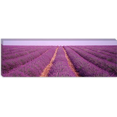 iCanvasArt France, View of Rows of Blossoms in a Field Canvas Wall Art