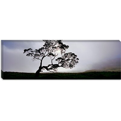 iCanvasArt Mauna Kea, Kamuela, Big Island, Hawaii Canvas Wall Art