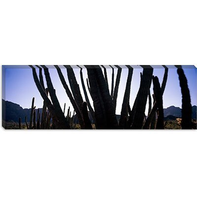 iCanvasArt Organ Pipe Cactus National Monument, Arizona Canvas Wall Art