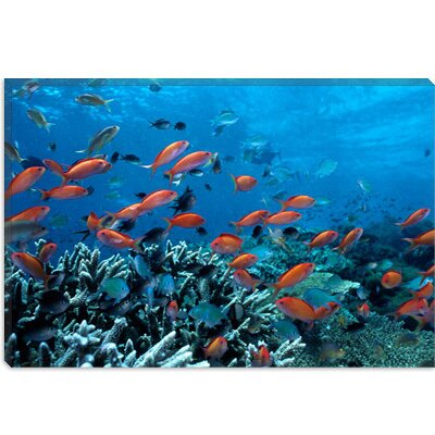 iCanvasArt Ocean Fish Coral Reef Canvas Wall Art