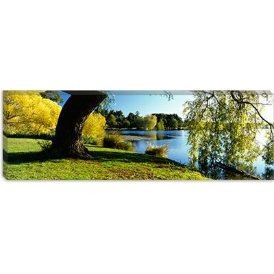iCanvasArt Willow Tree by a Lake, Green Lake, Seattle, Washington State Canvas Wall Art