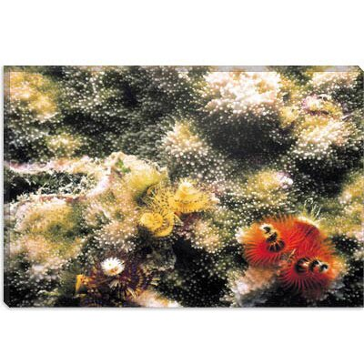 iCanvasArt Spiral Coral #2 Photographic Canvas Wall Art