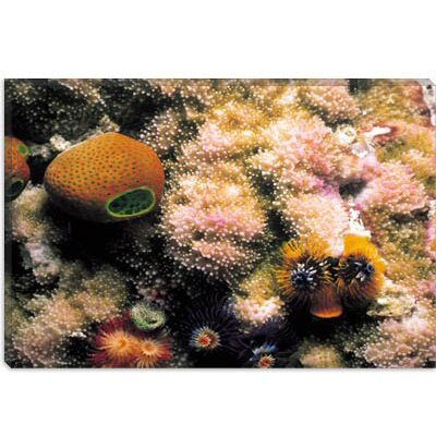 iCanvasArt Spiral Coral Photographic Canvas Wall Art
