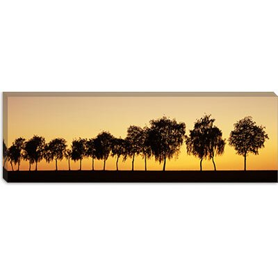 iCanvasArt Tree Alley at Sunset, Hohenlohe, Baden-Wurttemberg, Germany Canvas Wall Art