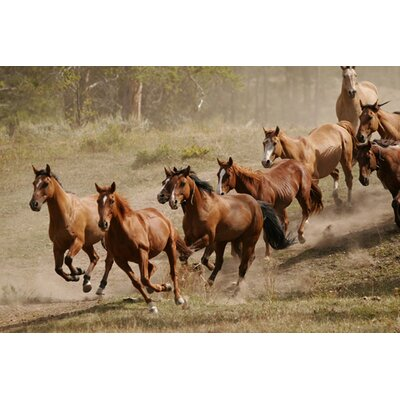 iCanvasArt Western Ranch Wild Mustangs Canvas Wall Art
