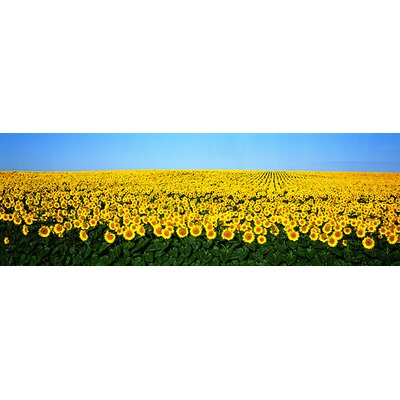 iCanvasArt Sunflower Field, North Dakota Canvas Wall Art