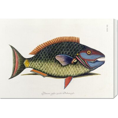 Bentley Global Arts 'The Parrot Fish' by Mark Catesby Stretched Canvas Art