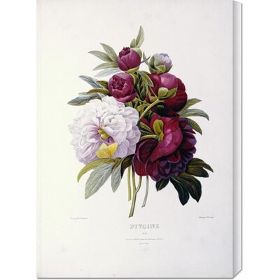 Bentley Global Arts 'Peonies' by Pierre Joseph Redoute Stretched Canvas Art