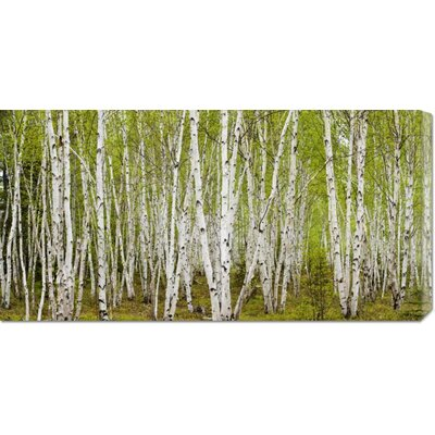 'White Birch Grove with Spring Foliage, Canada' by Don Johnston Stretched Canvas Art