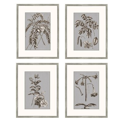Buchoz Flowers Framed Graphic Art in Gray