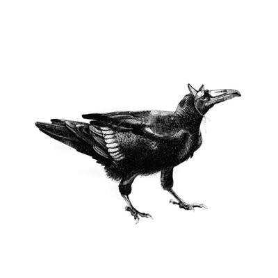 KESS InHouse Raven Placemat