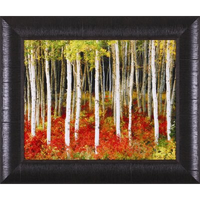 Aspen Grove Framed Artwork