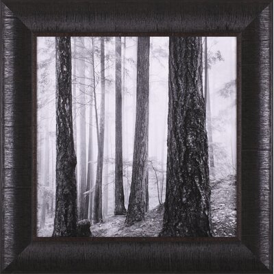 Capilano Forest Framed Artwork