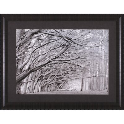 Art Effects Crystal Grove Framed Artwork