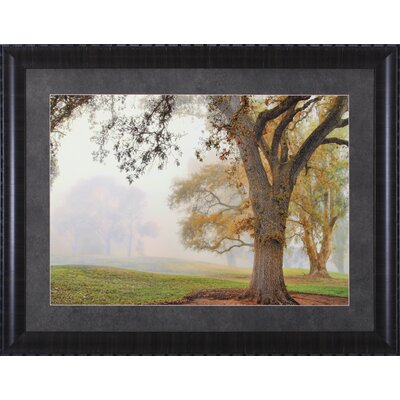 Oak Grove, Eucalyptus and Lakeside by Donald Satterlee Framed Photographic Print