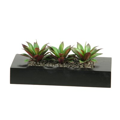 D & W Silks Aloe Plant Succulents in Wooden Tray