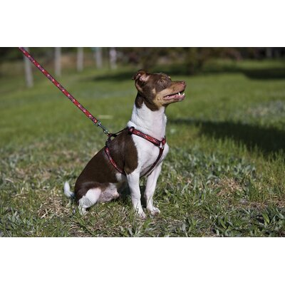"Lupine Pet Wild West 1/2"" Adjustable Medium Dog Roman Harness"