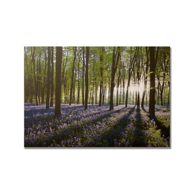 Portfolio Bluebell Landscape Printed Photographic Print on Canvas