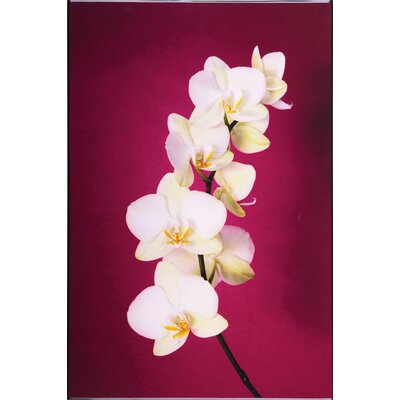 Graham and Brown Fucshia Orchid Lacquer Photographic Print