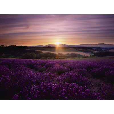 Graham and Brown Lavendar Sunset Photographic Print on Canvas