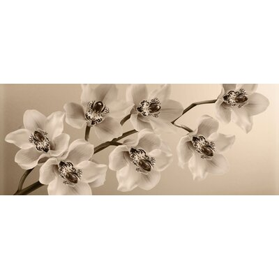 Graham and Brown Orchid Branch Photographic Print on Canvas
