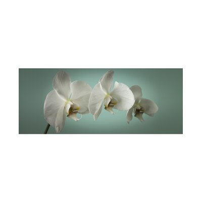 Graham & Brown Graham and Brown Teal Orchid Photographic Print on Canvas