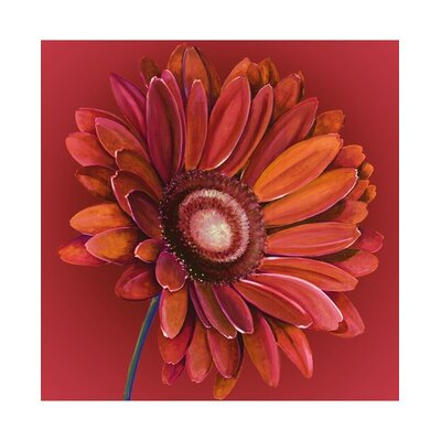 Graham & Brown Hand Painted Gerbera Canvas