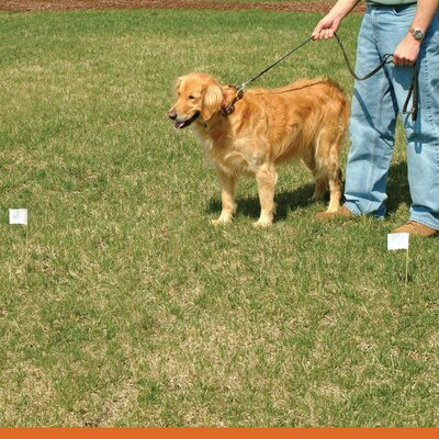 FREQUENTLY ASKED QUESTIONS - ELECTRIC DOG FENCE AND PET
