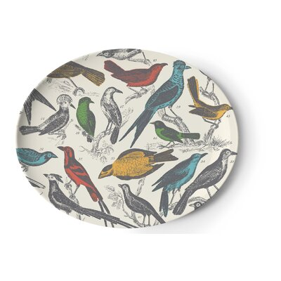 Thomas Paul Ornithology Tray