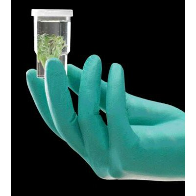 Ansell Green 240 mm NeoTouch® 13 mil Neoprene Powder-Free Disposable Gloves With Textured Finger Tip Finish And Beaded Cuffs