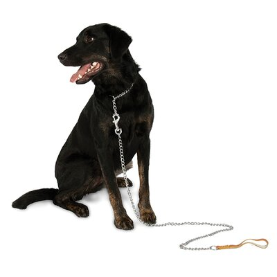 Petmate Aspen Pets Link Chain Dog Collar