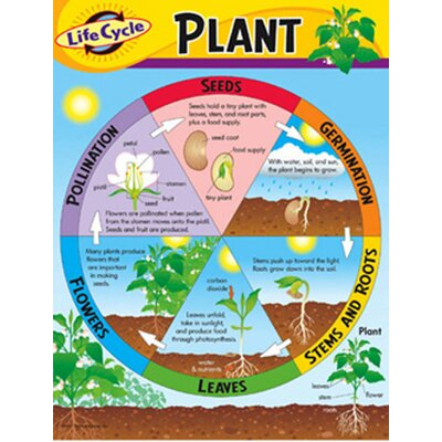 Trend Enterprises Chart Life Cycle Of A Plant K-3