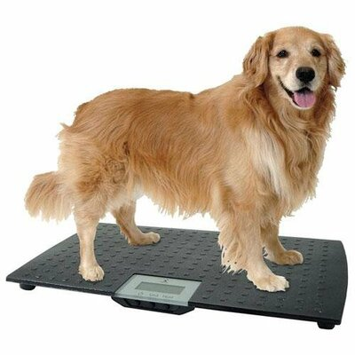 Large Precision Digital Pet Scale