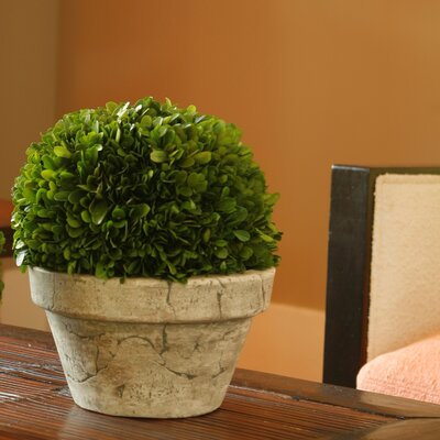Napa Home and Garden Preserved Boxwoods Large Preserved Greens Ball Pot