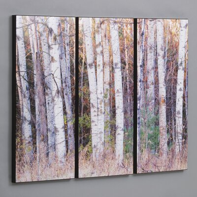 Wilson Studios Birch Trees In The Fall 3 Piece Framed