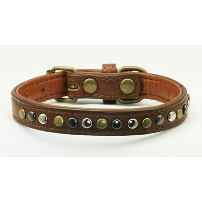 Metro Metal Dog Collar