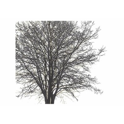 4 walls modern murals tree hugger wall mural reviews for Black tree mural