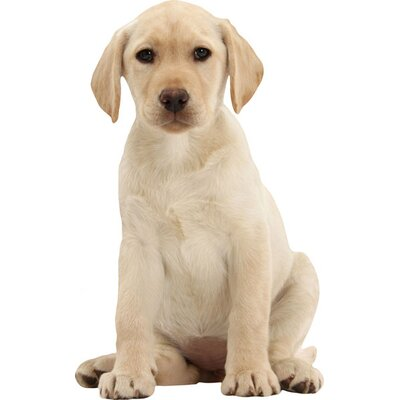 4 Walls Good Dog Yellow Lab Wall Decal