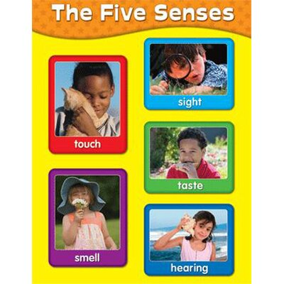 Frank Schaffer Publications/Carson Dellosa Publications Chartlets The Five Senses