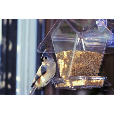 Aspects Inc Cafe Window Feeder in Clear