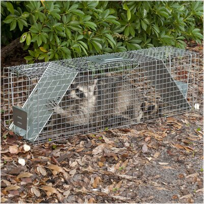 Havahart X-Large 2-Door Live Animal Trap
