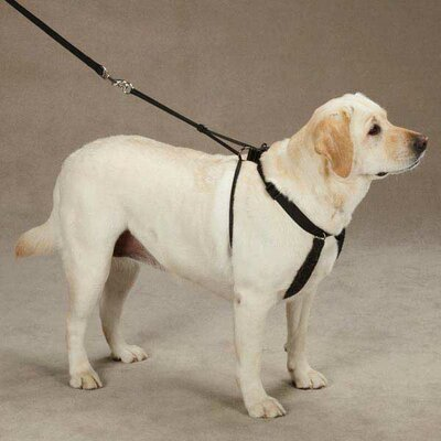 Guardian Gear Anti Pull Harness