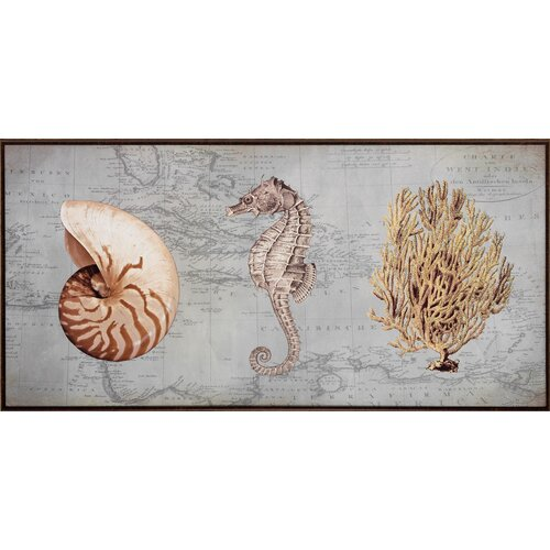 Sea Treasures I Framed Graphic Art