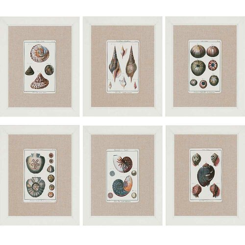 Sea Shells by Diderot 6 Piece Framed Painting Print Set