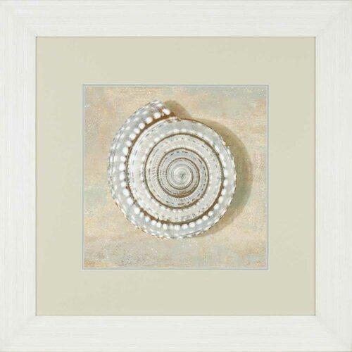 Aqua Seashell by Kelly Framed Graphic Art
