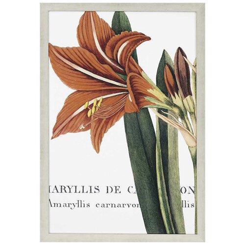 Botanique I Framed Graphic Art