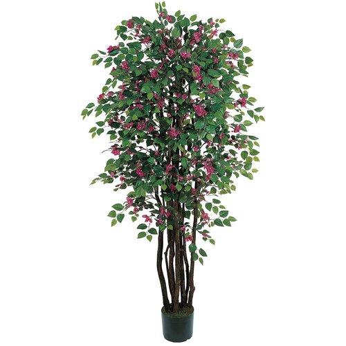 Bougainvillea Tree in Pot